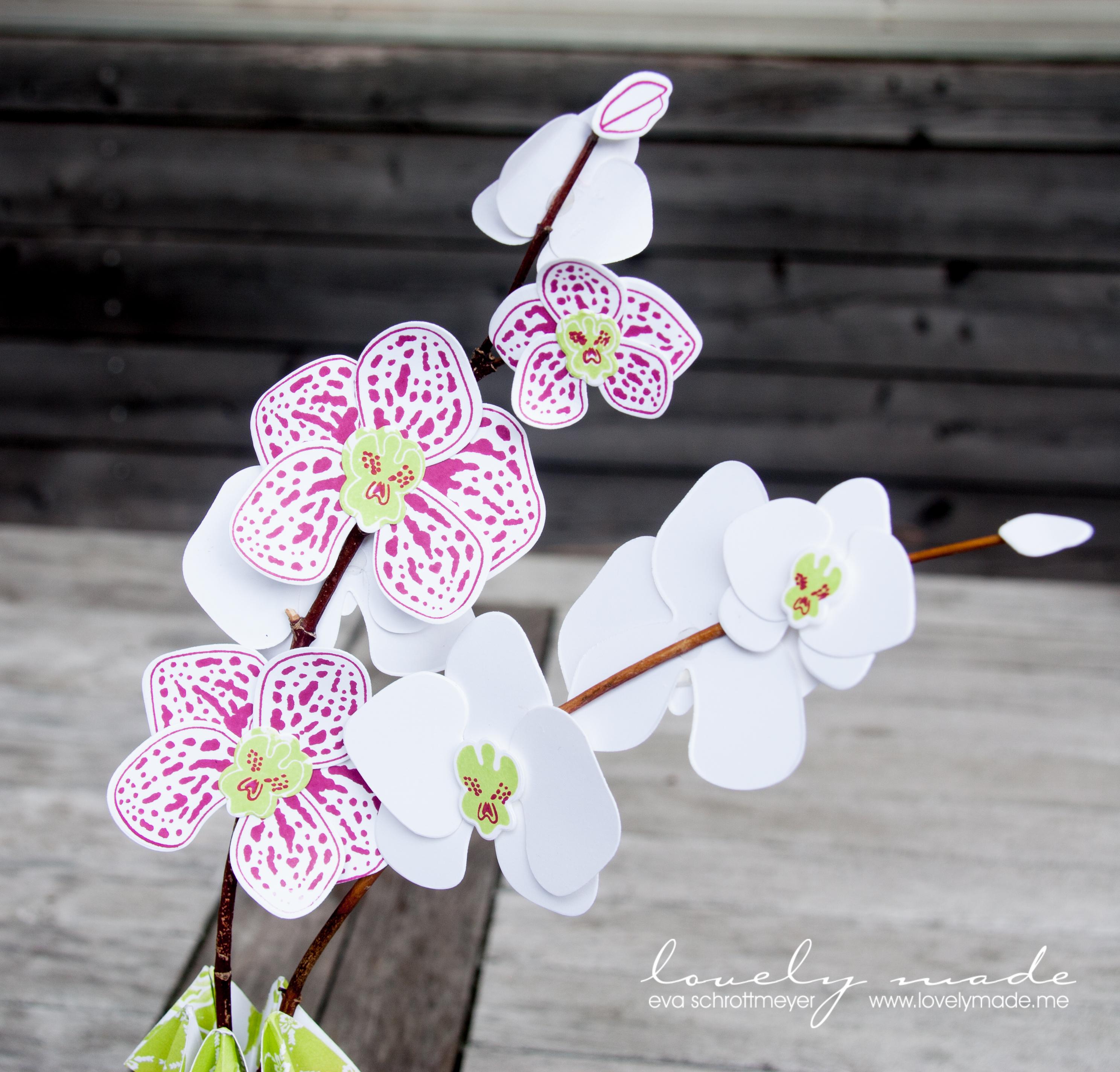 orchideen in der vase lovelymade. Black Bedroom Furniture Sets. Home Design Ideas